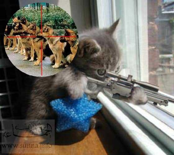 cat with sniper