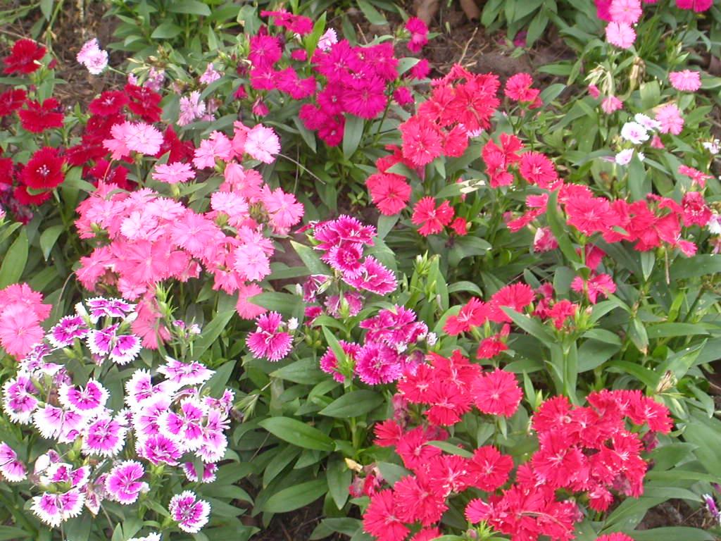 Baby Huggables: Flower Gardens