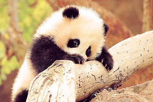 The Cheetah Girls As Wallpaper Imagenes Everywhere Ositos Panda