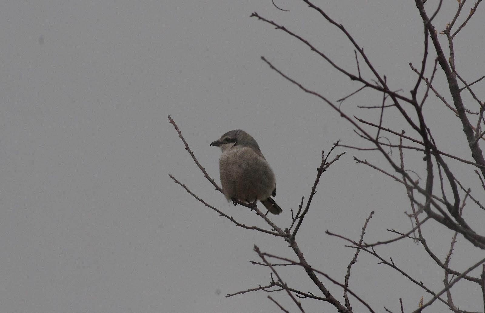 A Fierce Bird