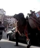 Ankara Sokaklarından Deve Geçti