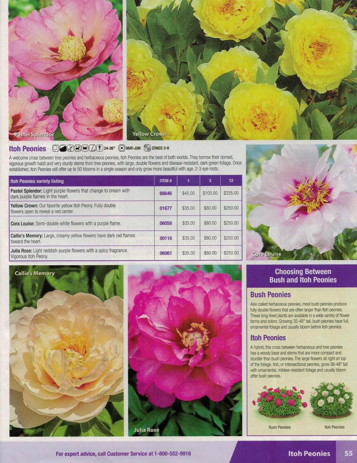 Southern Peony Catalog