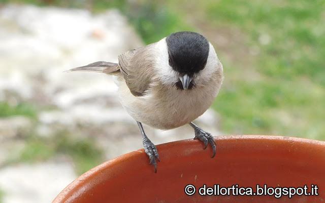 birdwatching rose ortica orto Savigno bologna Valsamoggia fattoria didattica
