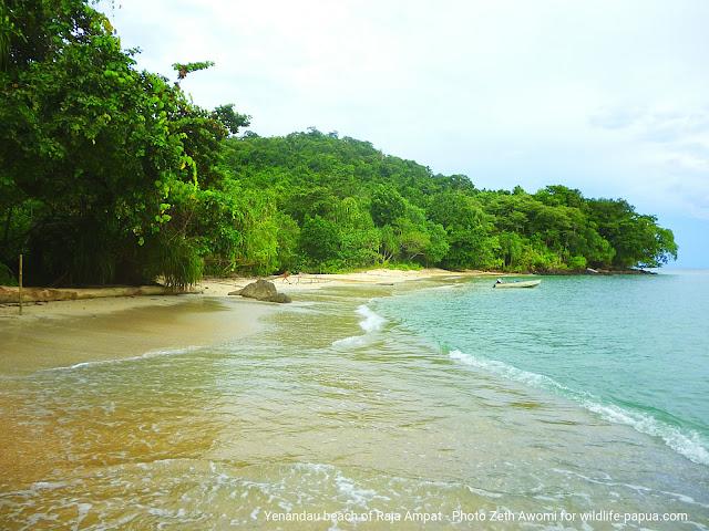 Paket wisata di Papua