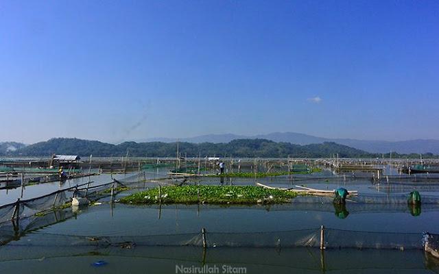 Pemandangan di Rowo Jombor, banyak sekatan tempat budidaya ikan