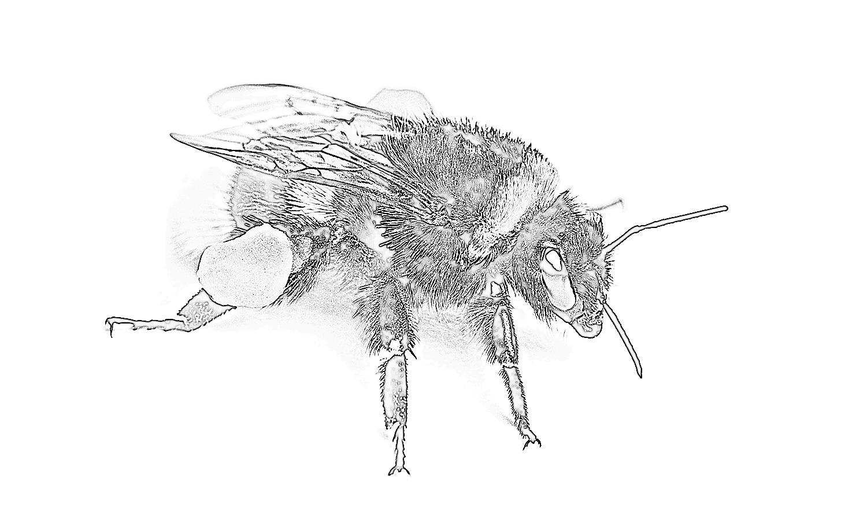 A One Pilgrim Publishing Blog Site Bumble Bee Hive
