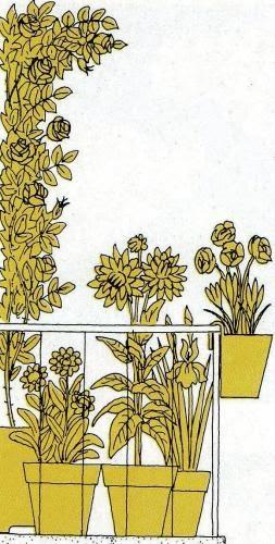 Piante e fiori il balcone tutto giallo fiori per chi for Tutto per il balcone