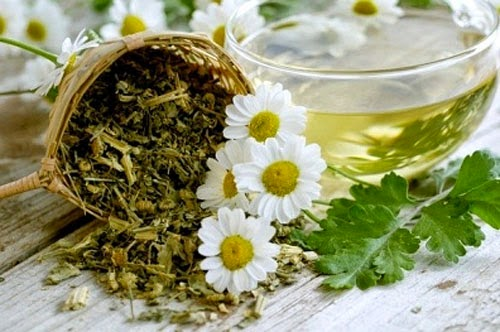 Những bài thuốc đông y chữa trị bệnh viêm họng hạt