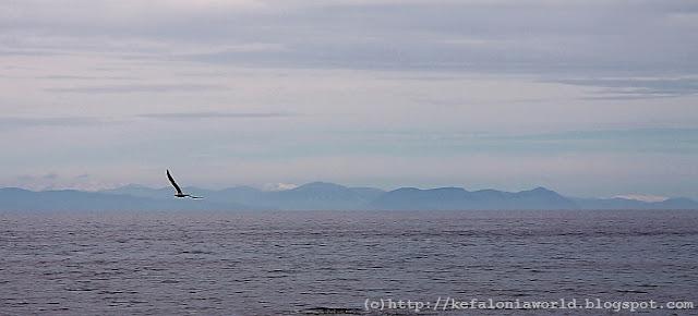 Seagull watching, Kefalonia