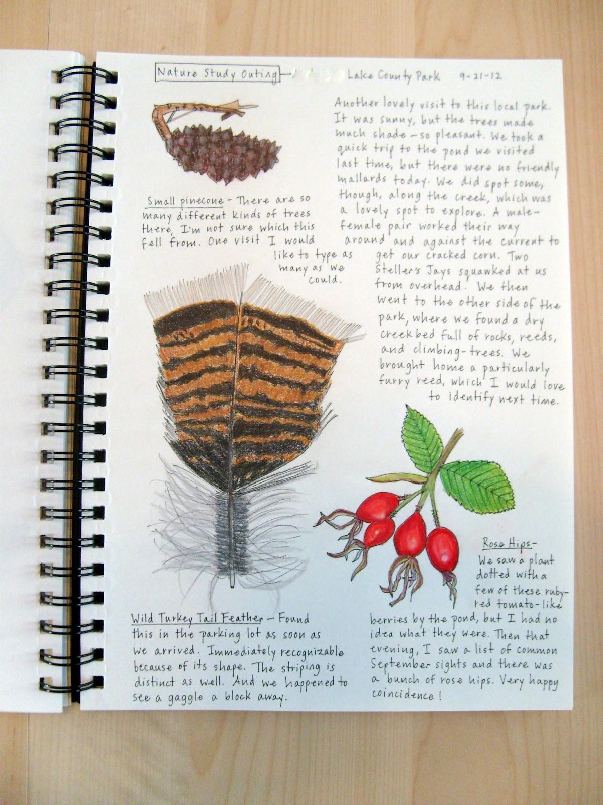 nature journal journals examples living peek she preschooler darling serious getting drawings very things