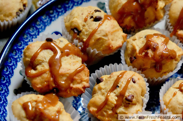 close up image of roasted golden beet muffins with chocolate chips and a caramel drizzle