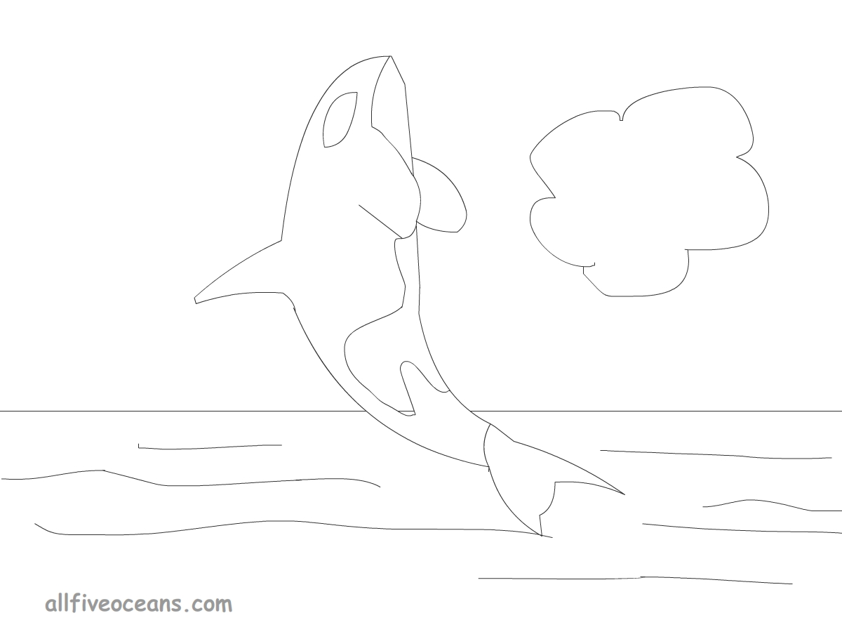 All Five Oceans: Orca Whale Coloring Page