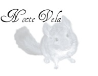 Nocte Vela Chinchillas
