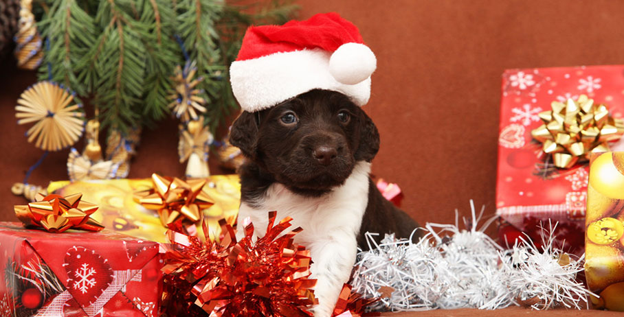 if you have not yet started planning how you will fill your furkids christmas stockings this year we hope some of these ideas will - Christmas Presents For Dogs