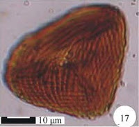 http://sciencythoughts.blogspot.co.uk/2014/05/pollen-and-spores-from-early-cretaceous.html