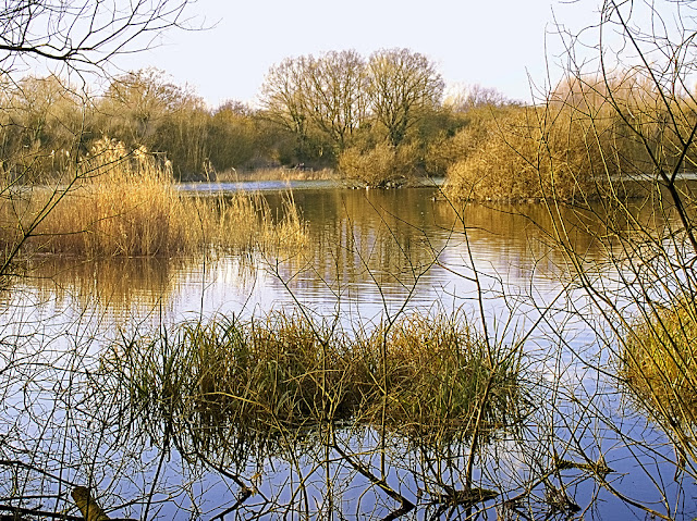 View over Dickerson's Pit, with bare trees and golden reeds