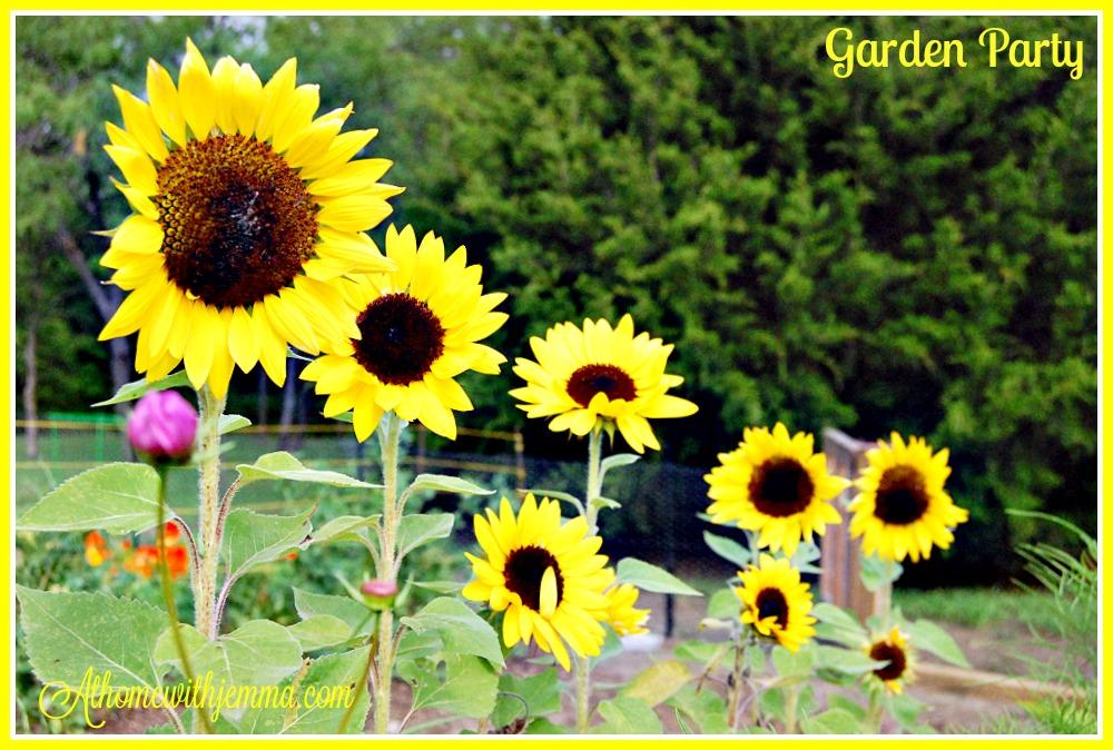 garden-gardening-planting-flowers-growing-athomewithjemma