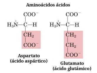 que es un aminoacido y cuales son sus grupos funcionales