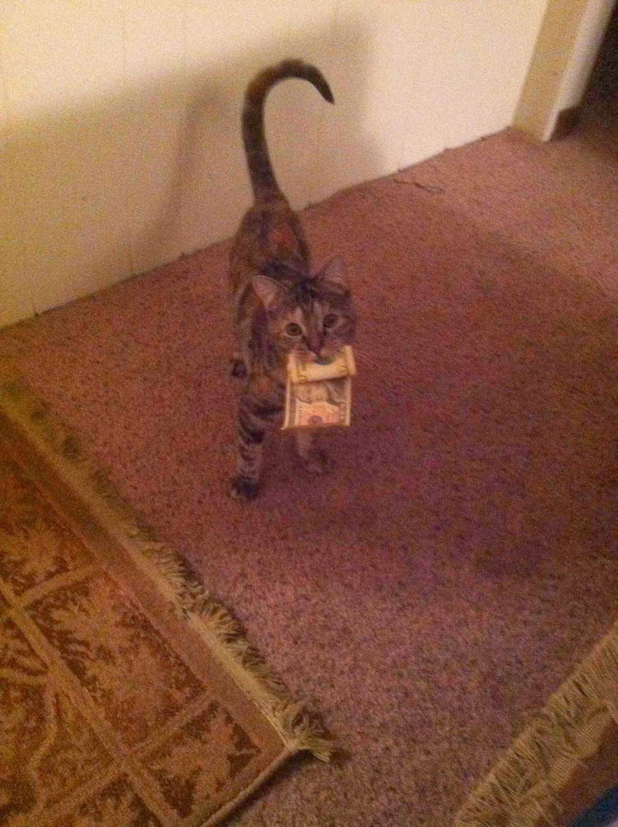 Funny cats - part 93 (40 pics + 10 gifs), cat with money on his mouth