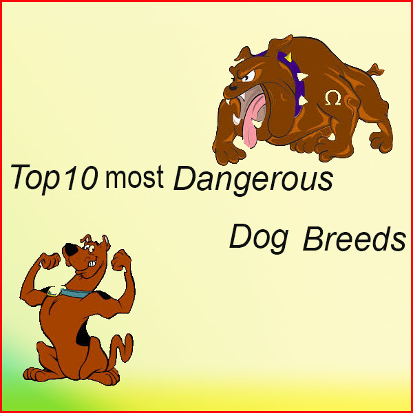 Top ten most dangerous dog breeds