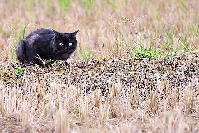cat, field, Wednesday, Okinawa, wordless