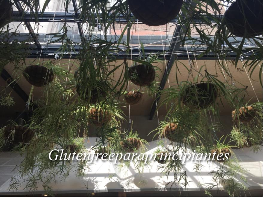 Gluten free para principiantes el huerto de lucas - Huerto para principiantes ...