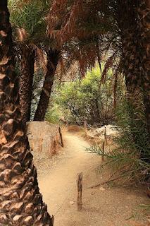 Las palmowy Preveli