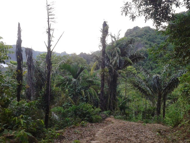 Hutan Bakka