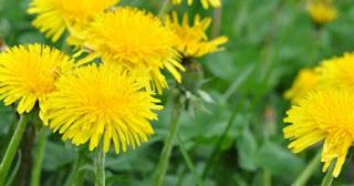 علاج ألم المعدة عبر الأعشاب و الطب البديل - جزيرة الثقافة