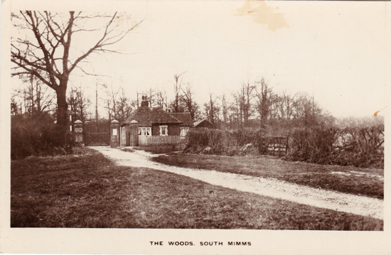 Photograph of the woods, South Mimms - image from Peter Miller's collection