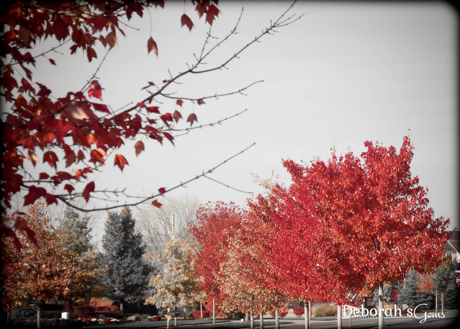 Autumn Glory 3 - photo by Deborah Frings - Deborah's Gems