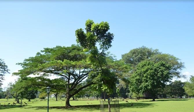 Kebun Raya Bogor Menjadi Salah Satu Pesona Wonderful Indonesia