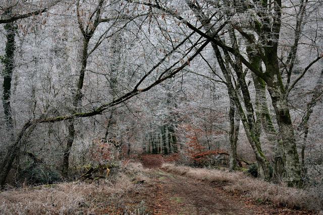 L'entrée de la futaie du Nid de l'Aigle par la route de la Fontain
