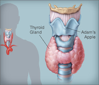 HYPOTHYROIDISM,  IT'S CAUSES, DIAGNOSIS,  CURE AND TREATMENT