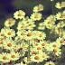 Papel de Parede Vintage Flores Margarida