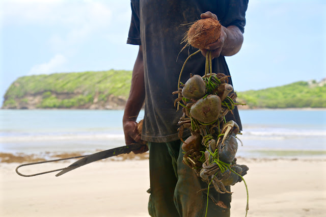 crab catching, Grenada