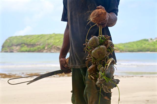 crab catcher, la sagesse, grenada