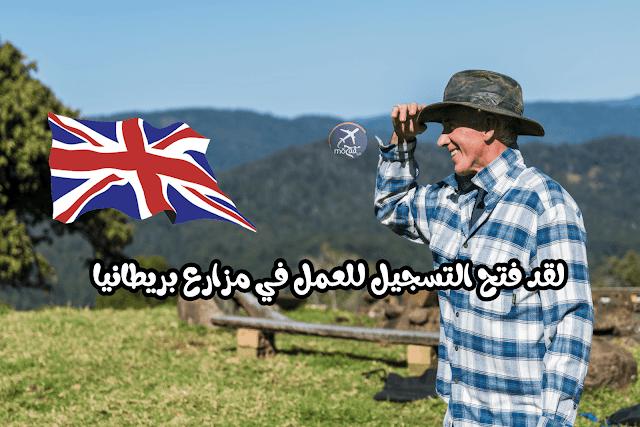 افتتاح التسجيل للعمل في المزراع البريطانية – العمل الموسمي