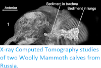 http://sciencythoughts.blogspot.co.uk/2014/11/x-ray-computed-tomography-studies-of.html