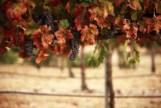 Roteiros do vinho na França