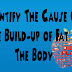 Identify The Cause Of The Build-up of Fat In The Body