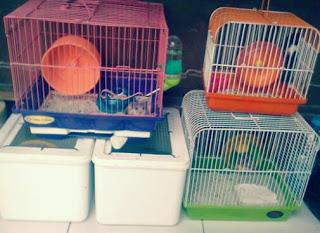 Kandang Hamster Ternak hamster