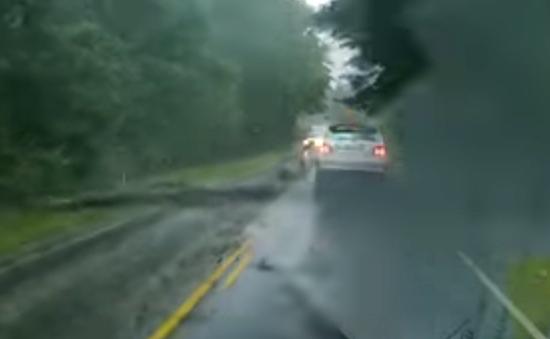 Vídeo impressionante - Árvore cai e carro se salva por pouco - Img 2