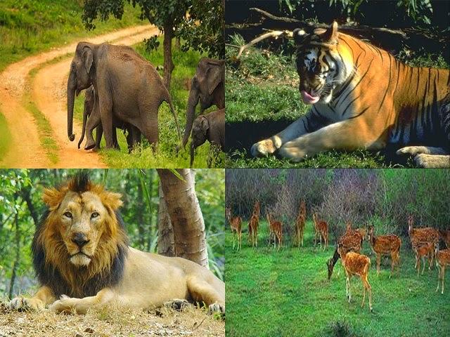 Bandipur National Park in Karnataka