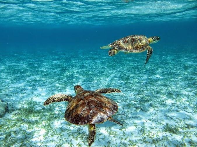 Wanderlist: Snorkelling the Belize Barrier Reef