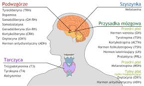 Inilah Fungsi Hormon Bagi Tubuh Manusia [Lengkap]