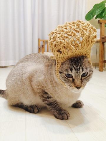 ネットバッグを頭に被せられている猫