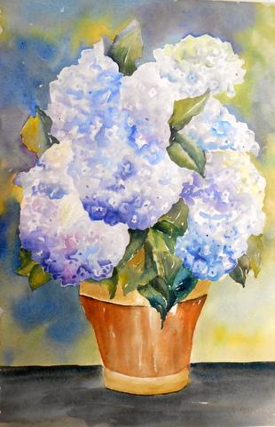L 39 acquerello di andreina ortensie in vaso for Ortensie in vaso