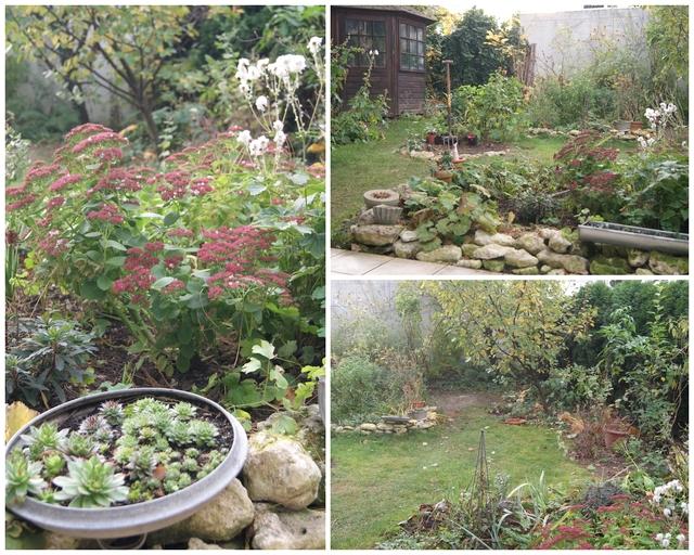 Garten im November Herbstfärbung Sedum
