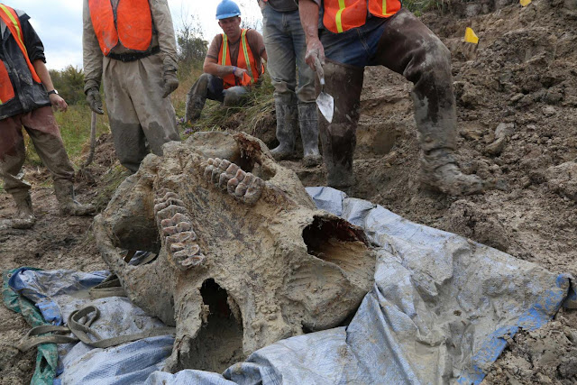 Team recovers 'most complete Michigan mastodon skeleton in many decades' from Thumb site